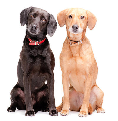 Two Dogs for social